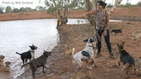 Desert dog's driving force Gloria, playing with her dogs at the waterhole