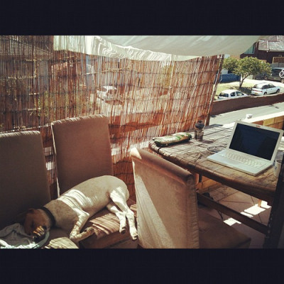 Rudimentary home office on balcony with bamboo fence, macbook on table, white dog sleeping on chairs
