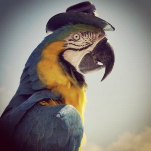 Parrot with hat on