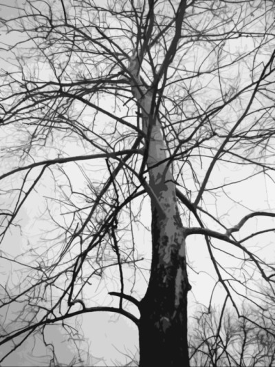 looking up into birch tree, artified