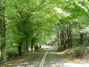 Road under lush green tree leaves