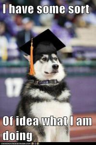 Dog with graduation hat, looking midly confused but determined