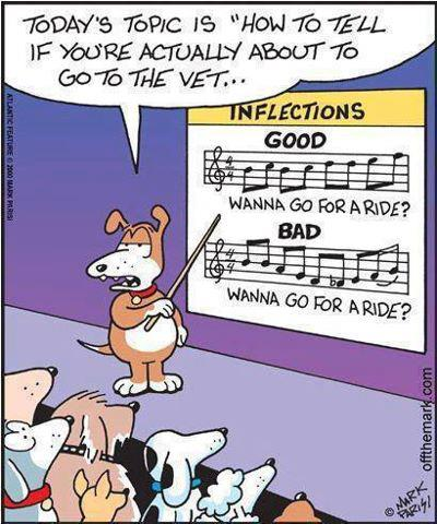 Cartoon - teacher dogs shows student dogs two note sheets contrasting the same sentence with two meaning - go for a drive and go to the vet