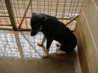 dog in pound