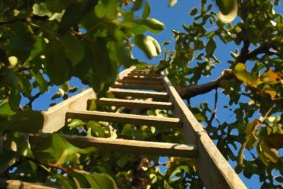 Ladder up into appletrees, artified