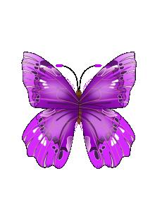 purple butterfly - clipart