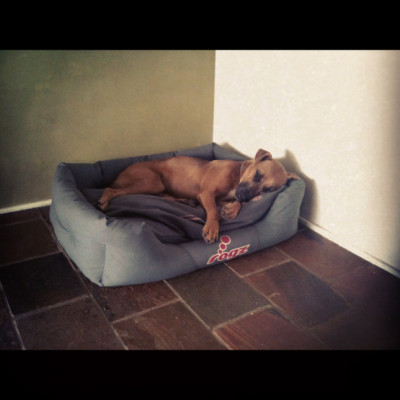 dog in dog bed, stone floor
