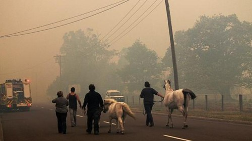 small group of 4 people have 2 horses with them for evacuation, walk on smoky road