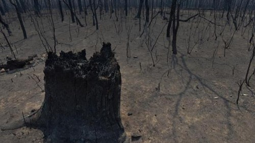 Burned out forest, all ashes