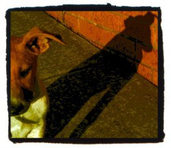 Puppy throwing a tall shadow on wall, red-brownish colours